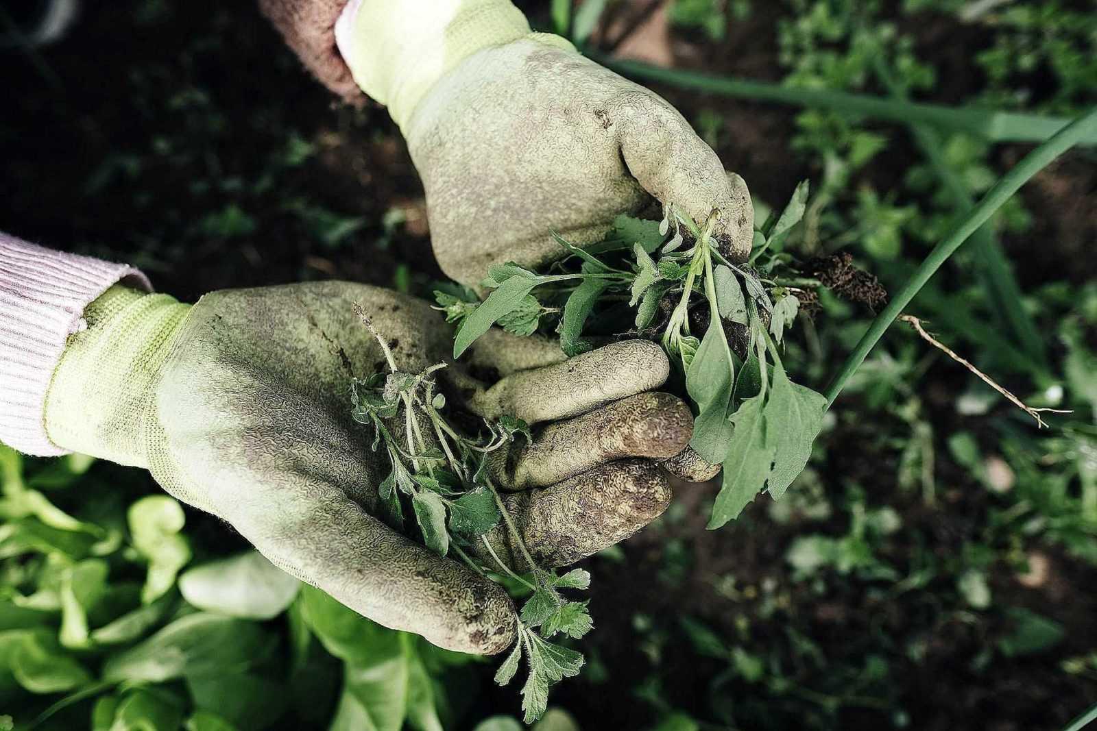 5 способов борьбы с сорняками