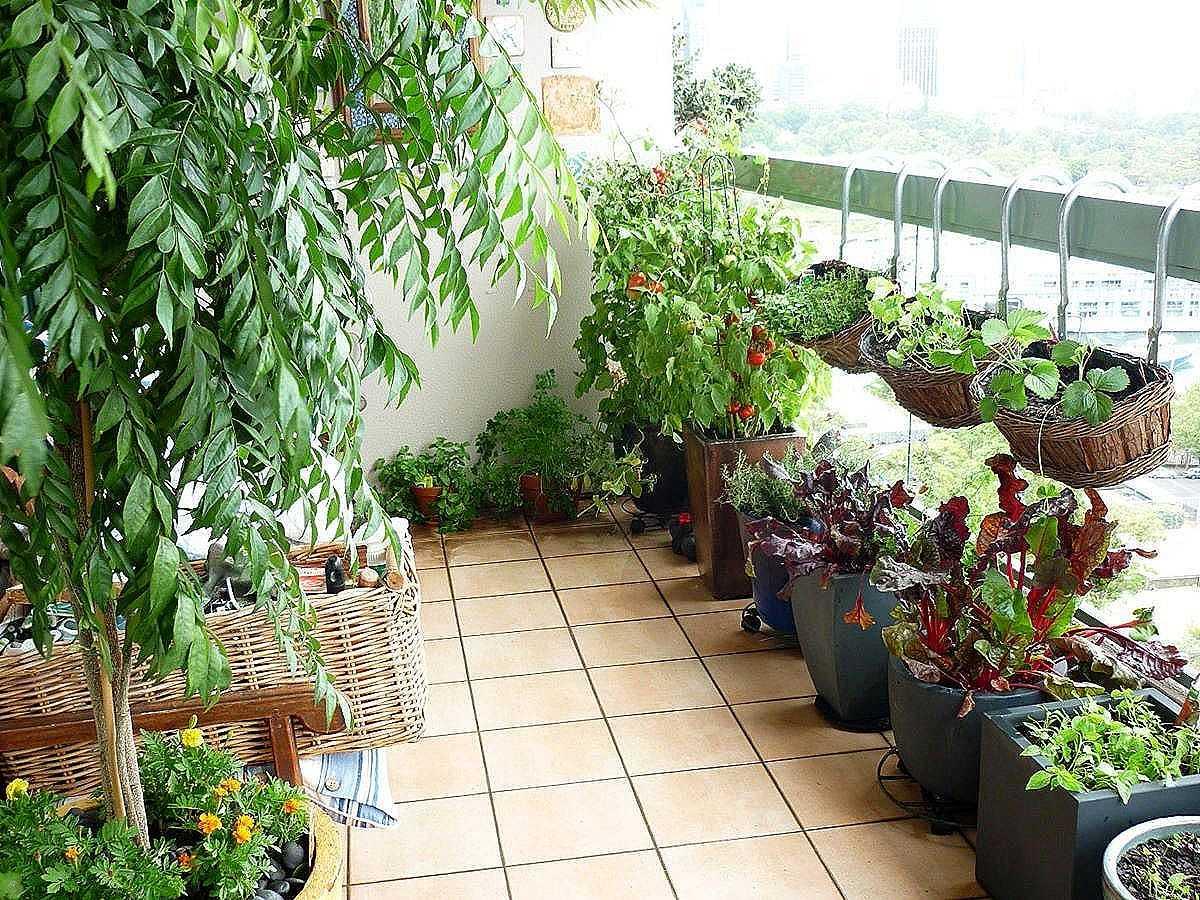 Овощные, фруктовые растения, а также пряности, которые можно выращивать на балконе
