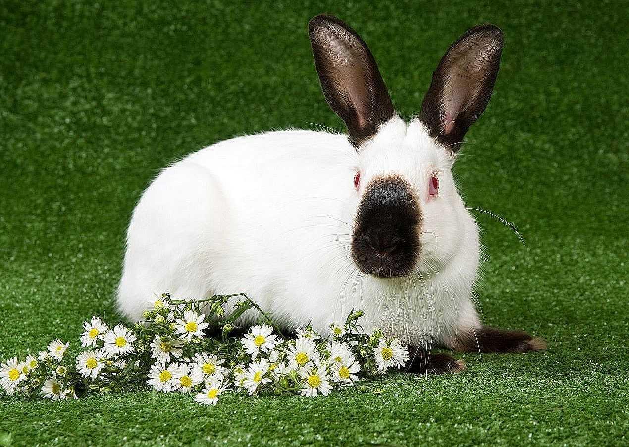 Какие кролики самые неприхотливые?