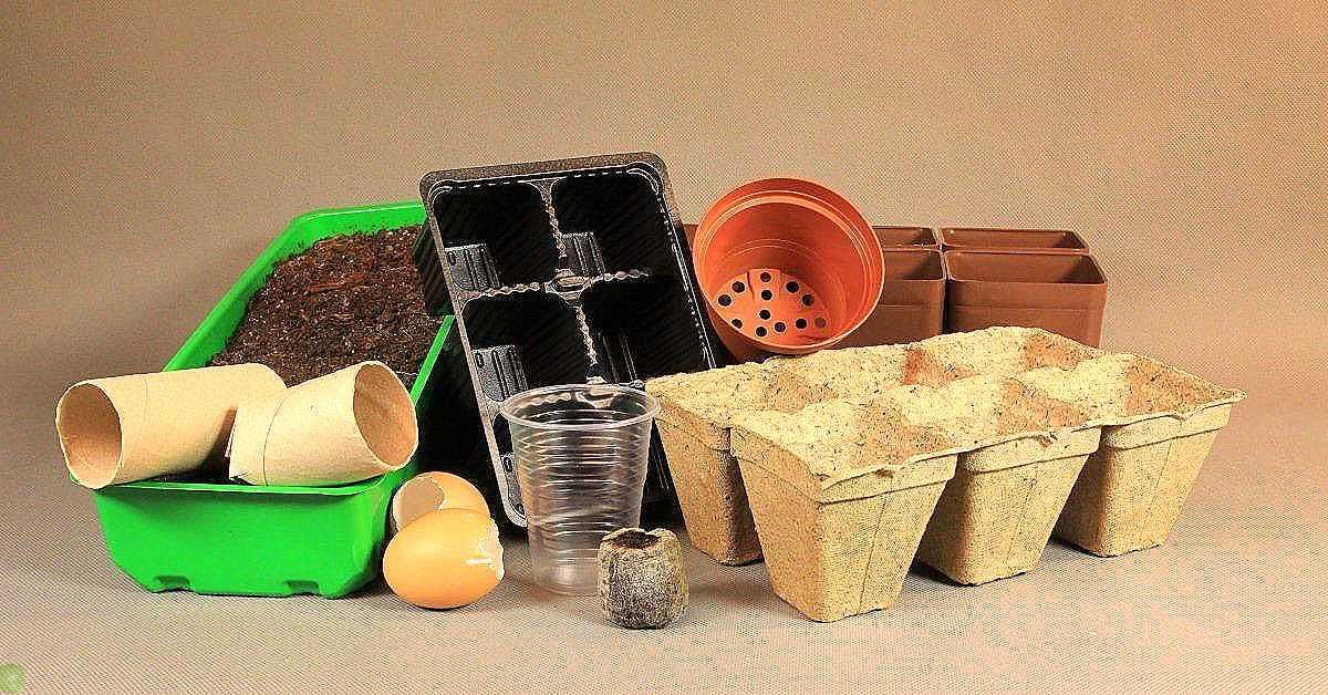 Кризис нам не помеха! 5 бесплатных контейнеров для выращивания саженцев