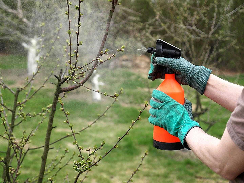 Как ухаживать за кустарниками весной