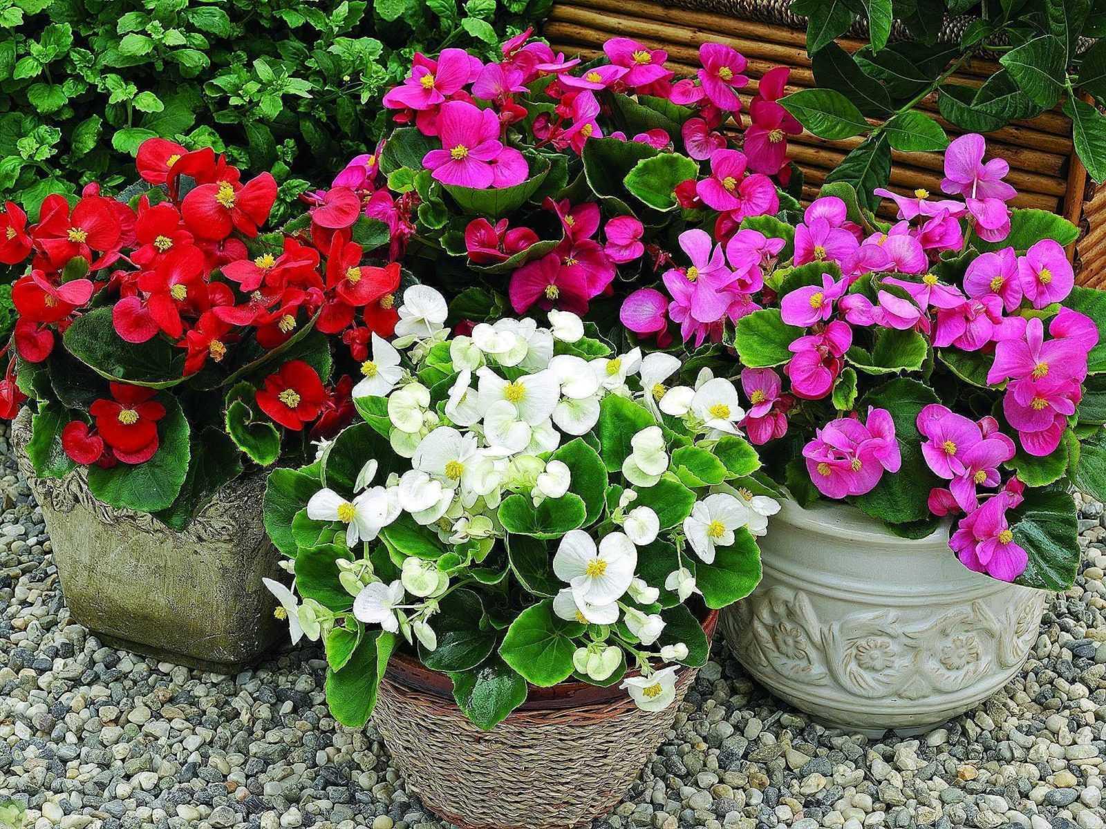Как ухаживать за цветущими растениями