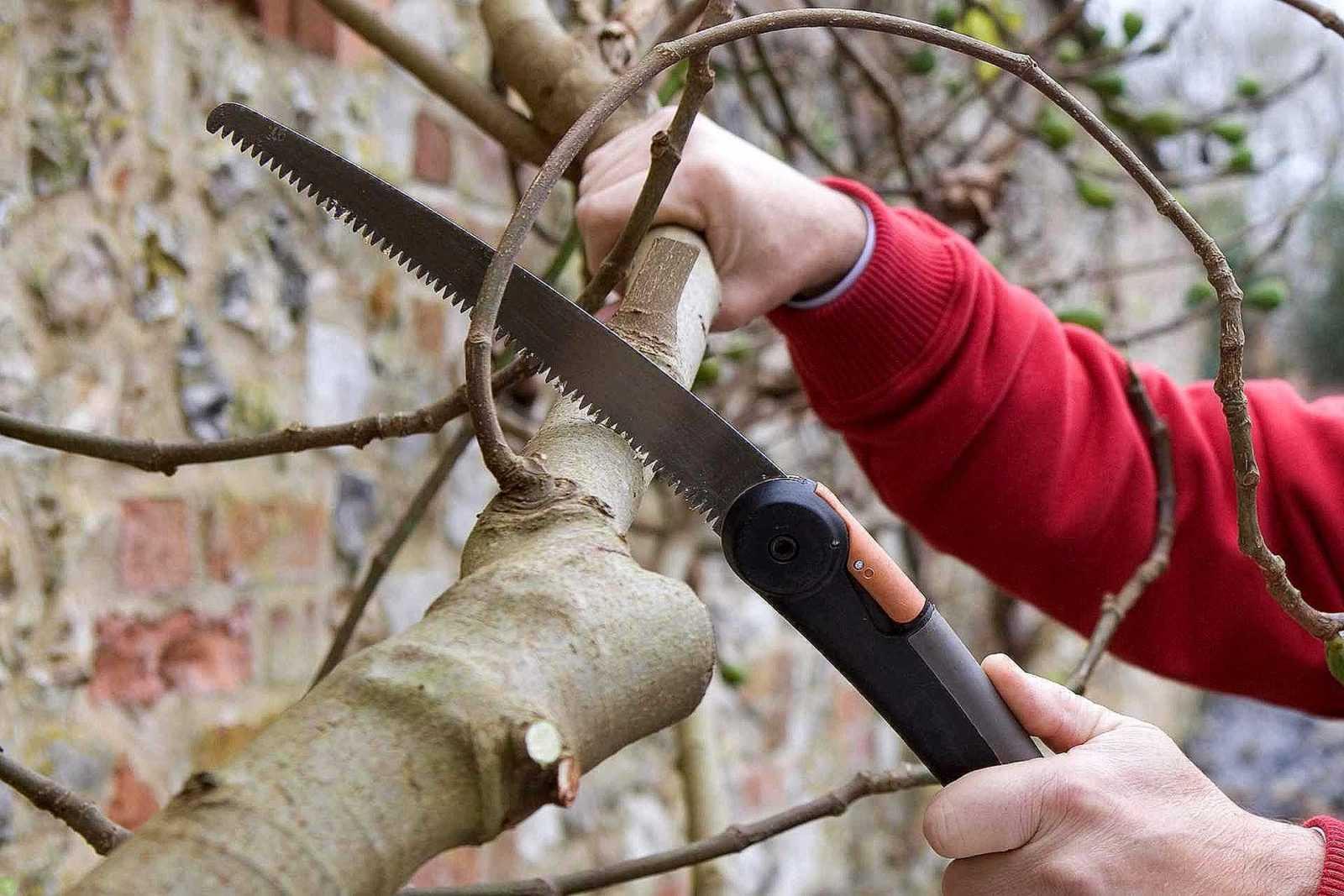 Основные этапы весенних работ в саду