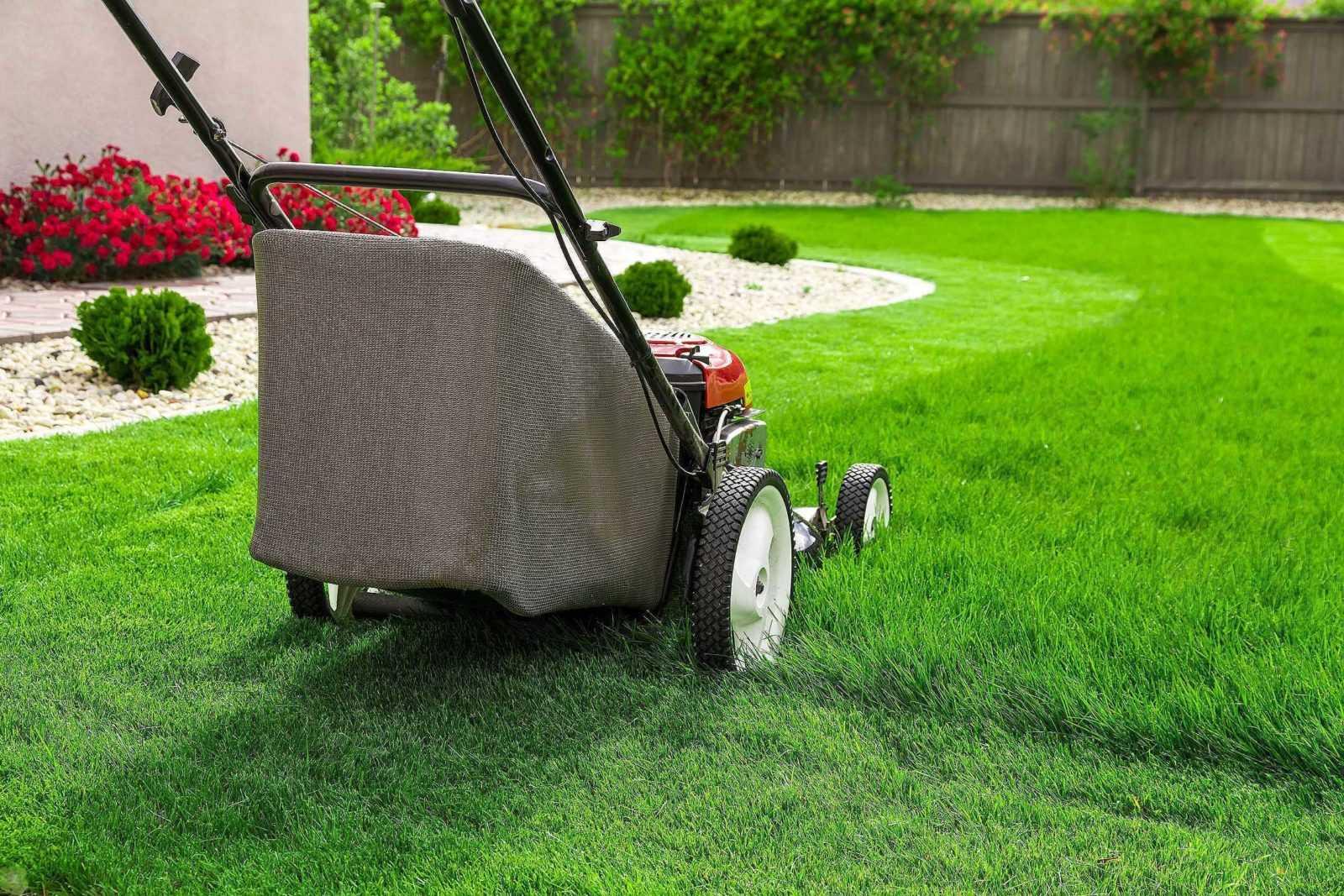 Как правильно ухаживать за газоном?
