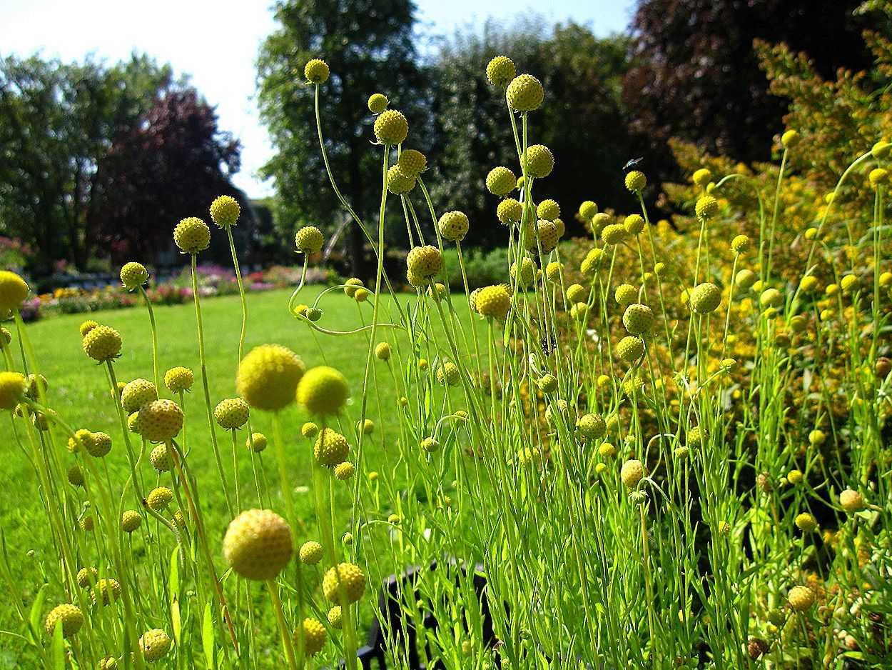 Можно ли вырастить на своем огороде экзотические растения?