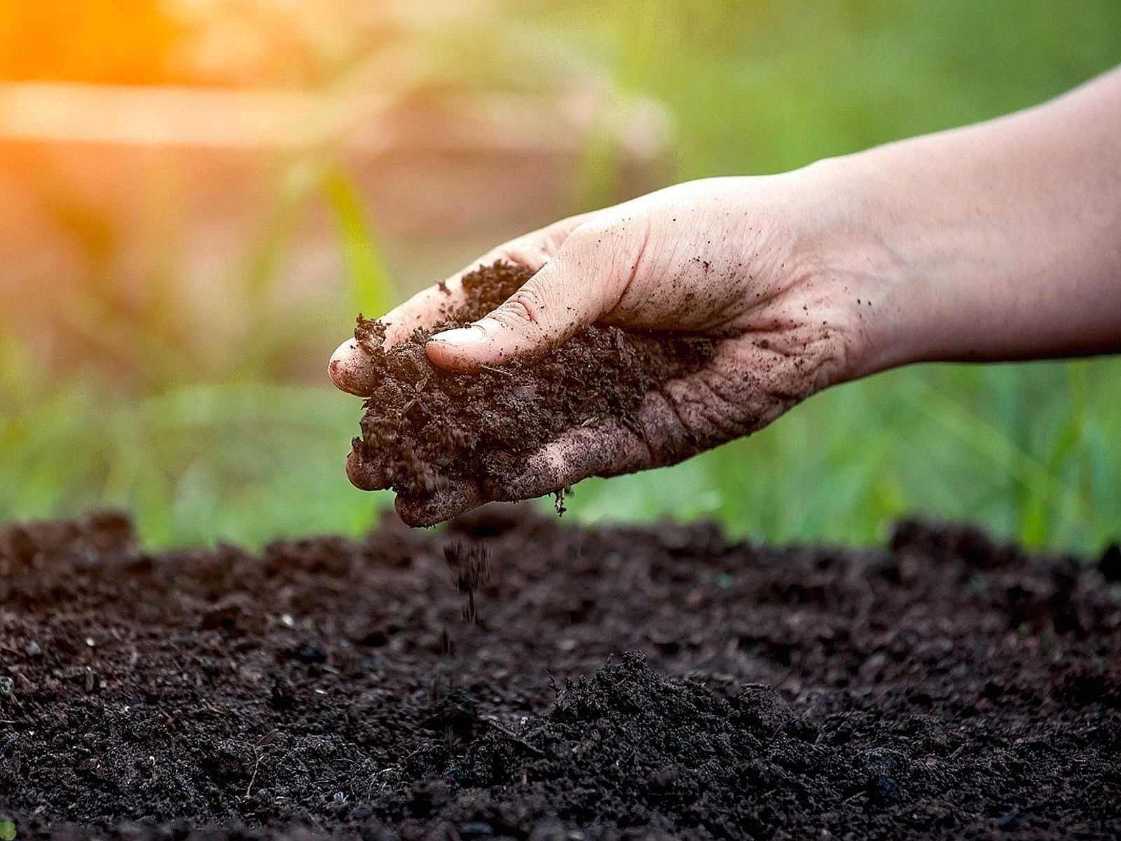 Проверка почвы на плодородность: три простых теста