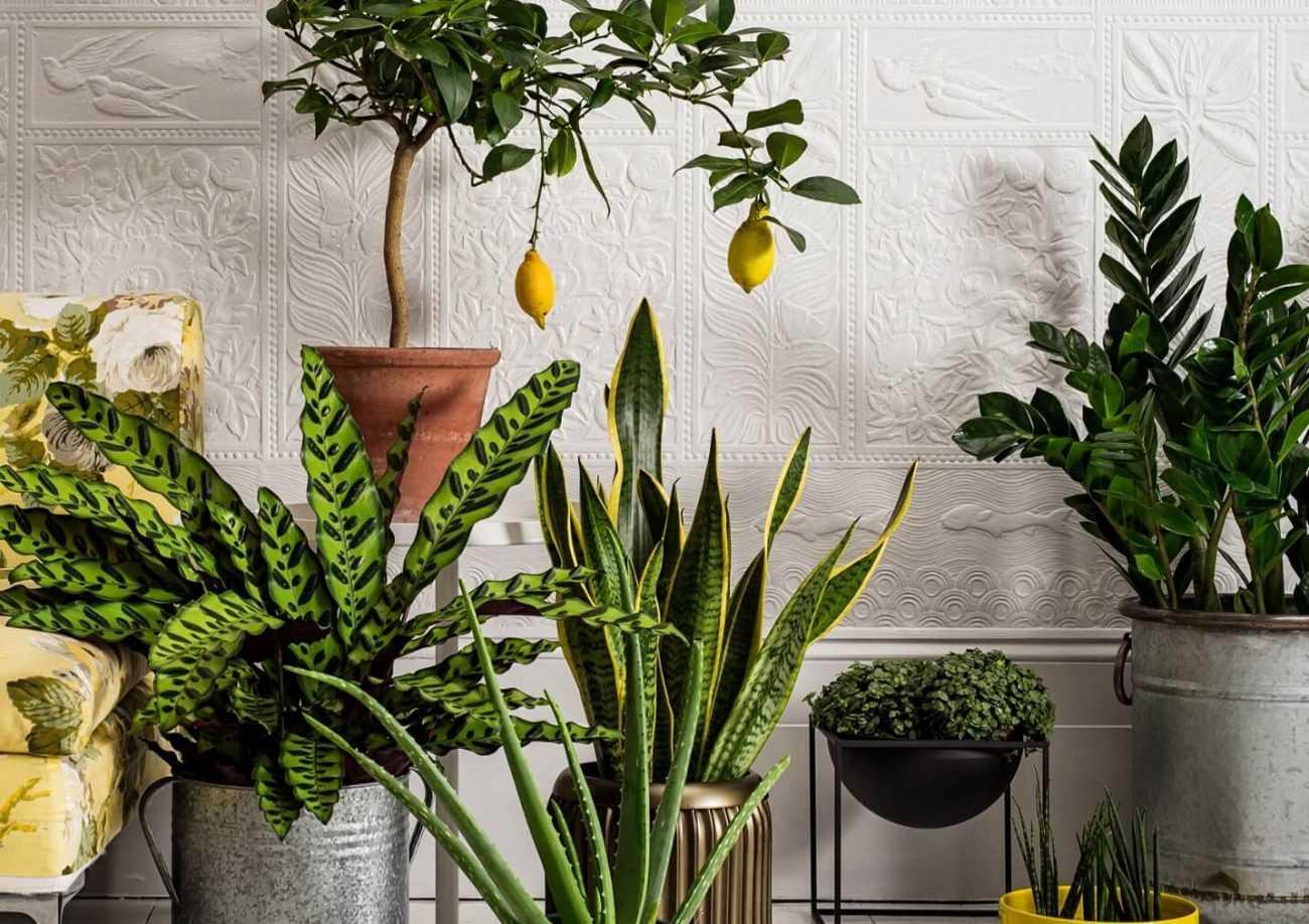 Полезные советы по уходу за комнатными растениями