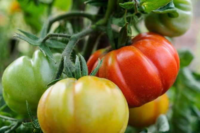 Грунт и удобрения для томатов