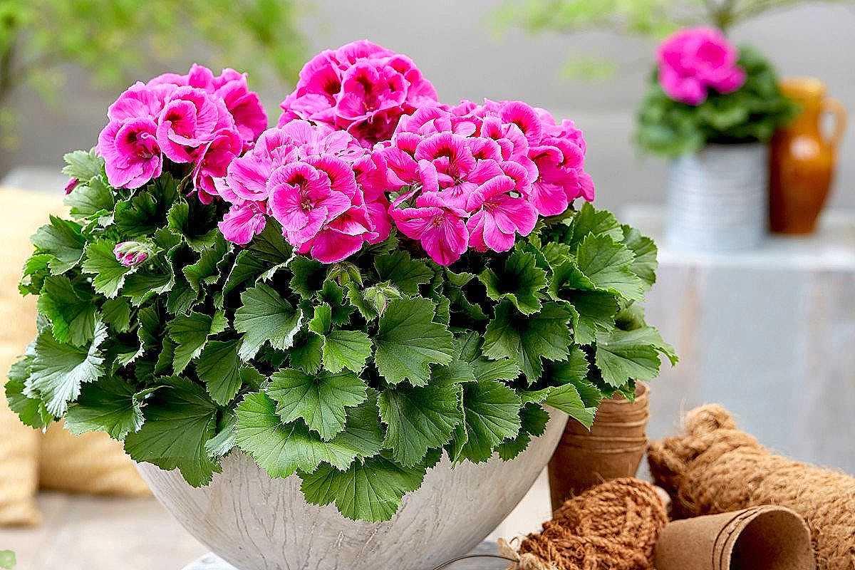 Удобные в уходе цветы на балконе для начинающих садоводов