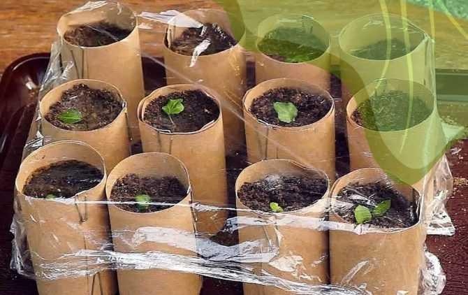 Техника высева семян