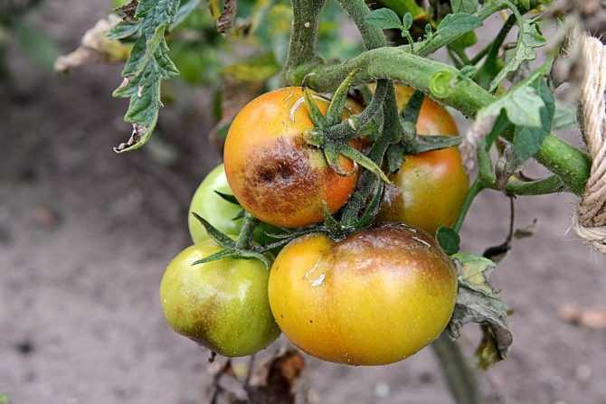 Про томаты