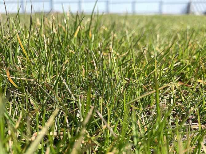 Альтернативные газоны: от выбора трав до нюансов ухода за ними