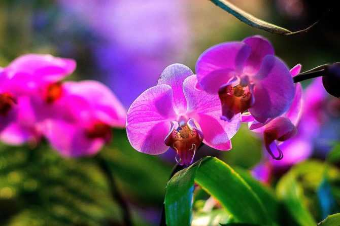 Выращивание орхидей — советы новичкам