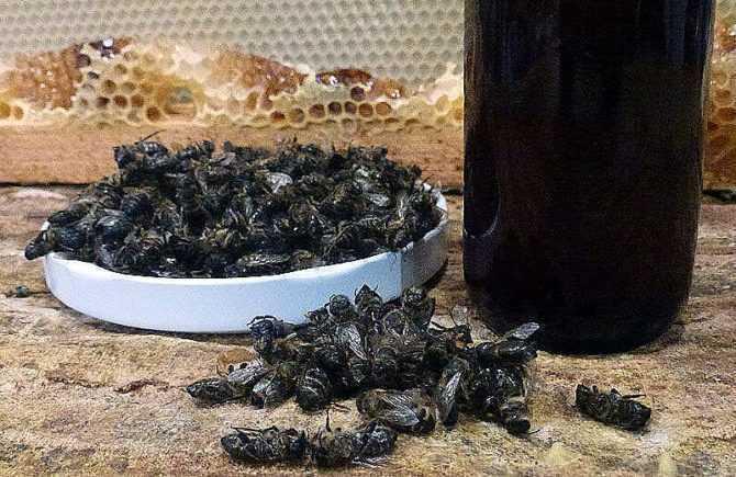 Пчелиный подмор: свойства и применение