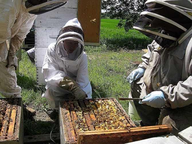 Инструкция для начинающего пчеловода